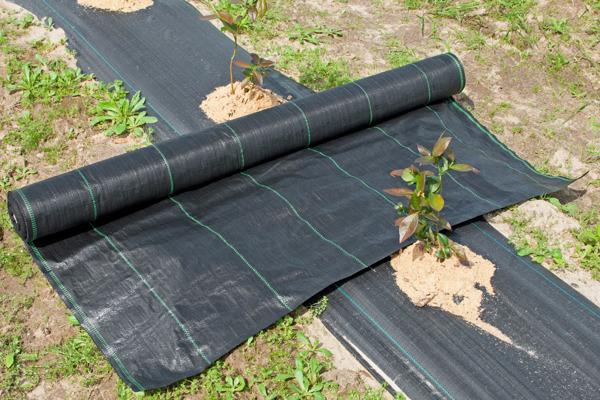 AGROTKANINA MATA  0,8x100m 70g/m2 UV Czarna