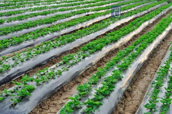 SZPILKI KOTWICE KOŁKI 100szt 14cm do agrowłókniny